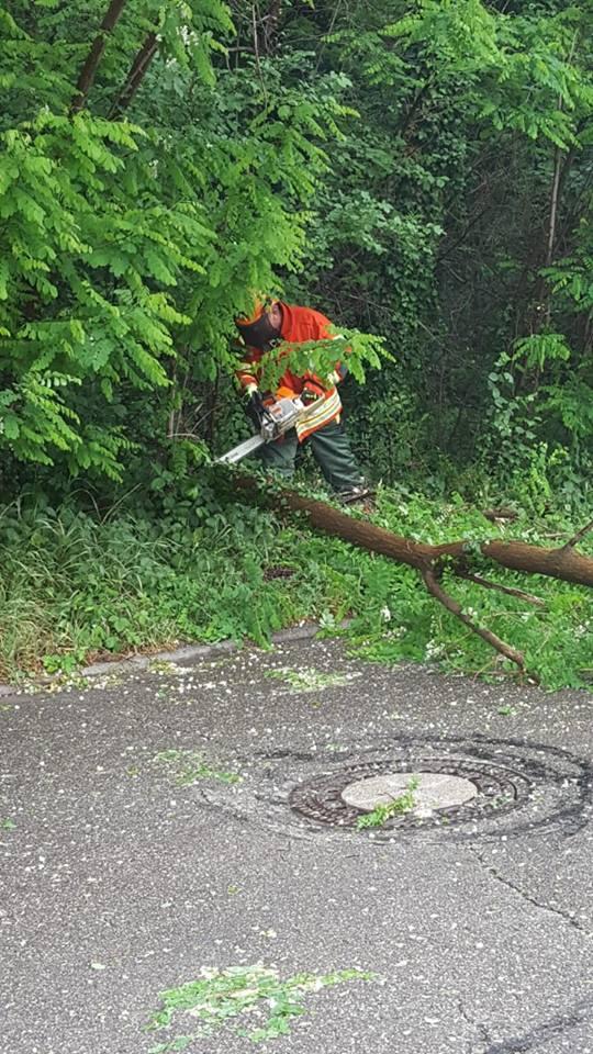 Einsatz 18-22: H1: Baum auf Fahrbahn